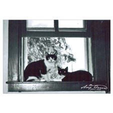 Two cat window