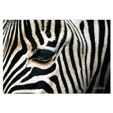 Eye of the Zebra