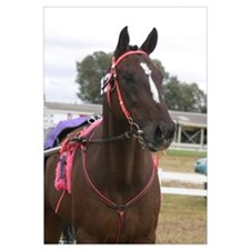 Cute Standardbred horse Wall Art