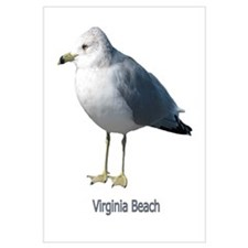 Virginia Beach Gull
