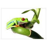 Unique Green tree frogs Wall Art