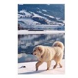 "Great Pyrenees Postcards (P. of 8)""Winter Lake"""