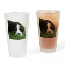 Bernese Puppy Drinking Glass