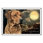 Moonlit Ridgeback Banner