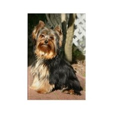 Yorkshire Terrier... Rectangle Magnet