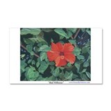 Red Hibiscus Car Magnet 20 x 12