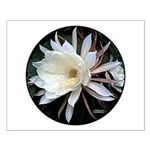 Epiphyte Cactus Flower Small Poster