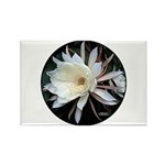 Epiphyte Cactus Flower Rectangle Magnet (10 pack)