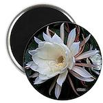 "Epiphyte Cactus Flower 2.25"" Magnet (100 pack"