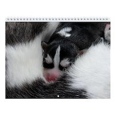 Gorgeous Horizontal Siberian Husky Wall Calendar