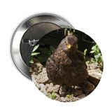 "Baby Blackbird 2.25"" Button"