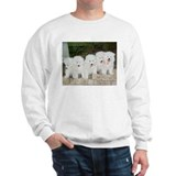Samoyed Puppies Jumper