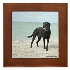 Black Labrador on the beach Framed Tile