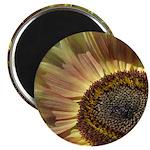 Autumn Sunflower Magnet