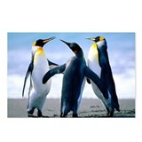 Family of Penguins Postcards (Package of 8)