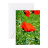 Poppy Greeting Cards (Pk of 20)