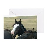 Blue Eyed Black - Note Cards (Pk of 10)