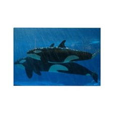 Orca Magnet 1 Magnets