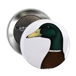 "Mallard Drake Head 2.25"" Button (100 pack)"