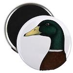 Mallard Drake Head Magnet