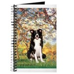 Spring & Border Collie Journal