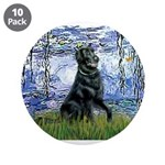 Lilies / Flat Coated Retrieve 3.5
