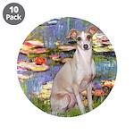 Lilies / Ital Greyhound 3.5