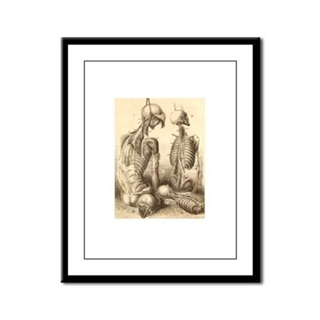 Medical Skeletons and Cadavers Framed Panel Print