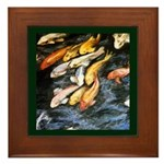 Koi Fish Framed Tile