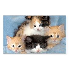 Shelter Kittens Decal