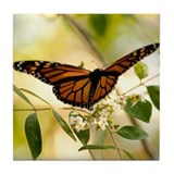 Monarch Tile Coaster