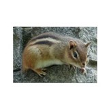 Eastern Chipmunk Rectangle Magnet