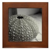 Urchin Framed Tile