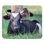 Moose humor iPad 2 Cover