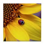 Ladybugs on Flowers Tile Coaster