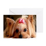 YORKSHIRE TERRIER CUTIE Greeting Card