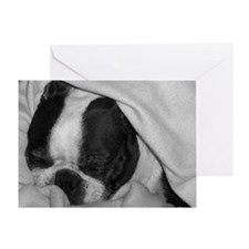 SLEEPING BOSTON TERRIER BEAUTY Greeting Card
