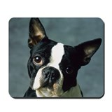 BOSTON TERRIER PORTRAIT Mousepad