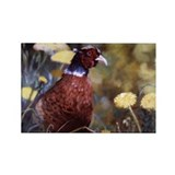 Ring necked pheasant Rectangle Magnet