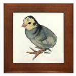 Turkey Poult Blue Slate Framed Tile