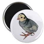 "Turkey Poult Blue Slate 2.25"" Magnet (10 pack"