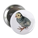 "Turkey Poult Blue Slate 2.25"" Button (10 pack"