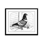 Starling Pigeon 1973 Framed Panel Print