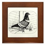 Starling Pigeon 1973 Framed Tile