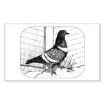 Starling Pigeon 1973 Sticker (Rectangle)