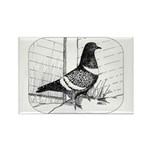 Starling Pigeon 1973 Rectangle Magnet (100 pack)