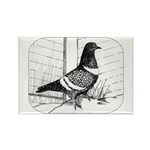 Starling Pigeon 1973 Rectangle Magnet