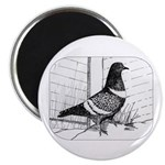 Starling Pigeon 1973 Magnet