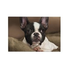 FRENCHIE PUPPY Rectangle Magnet