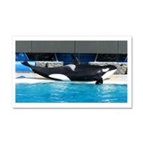 Helaine's Orca (Killer Whale) Car Magnet 20 x 12